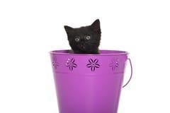 Black kitten in purple pail. Cute black baby kitten inside of purple bucket isolated on white background stock photos