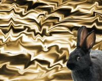 Cute black bunny rabbit against an abstract gold background Stock Image