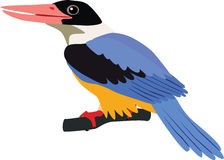 Cute Black-capped kingfisher vector Royalty Free Stock Image
