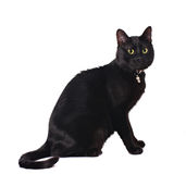 Cute black cat. Sitting isolated on white Royalty Free Stock Photography