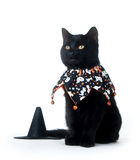 Cute black cat in Halloween bib Stock Images