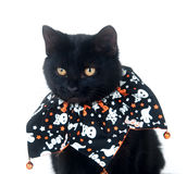 Cute black cat in Halloween bib Royalty Free Stock Photo