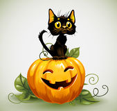 A cute black cat on a Halloween pumpkin. Stock Image