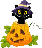 Cute black cat with Halloween pumpkin. Illustration of Cute black cat with Halloween pumpkin Royalty Free Stock Image