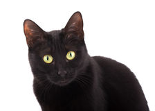 Cute black cat looking up, on white background Stock Photo