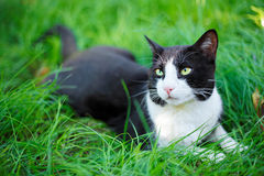 Cute black cat lying on green grass Royalty Free Stock Image