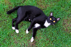 Cute black cat lying on green grass lawn Royalty Free Stock Photography