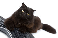 Cute black cat over keyboard isolated Stock Images