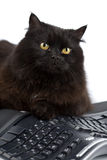Cute black cat over keyboard isolated Stock Photos