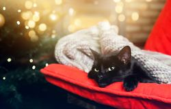 Cute black cat peacfully sleeping on red chair, christmas tree a. Cute black cat peacfully leeping on red chair, christmas tree and fire burning in fireplace in Royalty Free Stock Photo