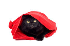 Cute black cat in a red bag isolated. Cute black cat hiding in a red bag isolated on white Stock Photo
