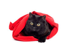 Cute black cat in a red bag isolated. Cute black cat sitting in a red bag isolated on white Stock Photography