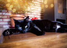 Cute black cat relaxing in front of christmas tree and fire burn. Cute black cat relaxing infront of christmas tree and fire burning in fireplace in the Stock Image