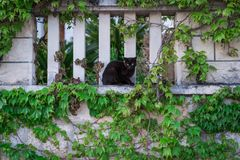 Cute black cat sitting on a leafy wall Stock Images