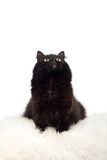 Cute black cat on the white fur isolated. Cute black cat sitting on the white fur isolated Royalty Free Stock Photos