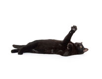 Cute black cat on white Stock Photo