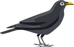 Cute black crow vector. Cute black crow cartoon vector royalty free illustration