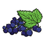 Cute black currant. Royalty Free Stock Photo
