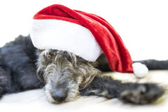 Cute black dog with christmas hat Stock Photography