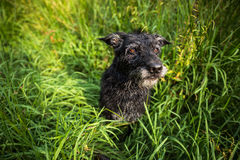 Cute black dog Stock Photo