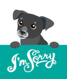 Cute Black Dog Holding A Message Board With The Text I`m Sorry. Hand drawn Inspirational And Encouraging Quote. Royalty Free Stock Images