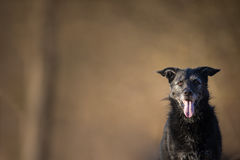 Cute black dog outdoors looking at the camera with lots of copy. Space Royalty Free Stock Photo