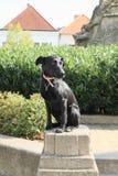 Cute black dog Stock Photos