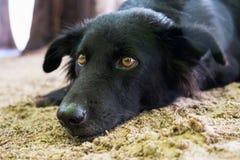 A cute black dog sleeping on the sand at the beach Stock Photos