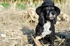 Cute black dog wearing a black hat sitting on the ground near a farm