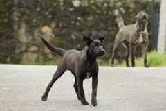 Cute black and grey dogs royalty free stock image