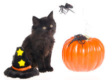 Cute black halloween kitten Royalty Free Stock Images