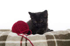 Cute black kitten on blanket Royalty Free Stock Photography