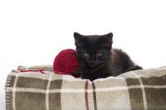 Cute black kitten on blanket Stock Image