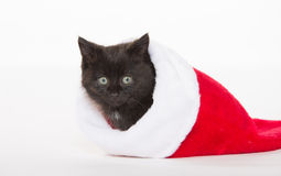 Cute black kitten in Christmas stocking Stock Images