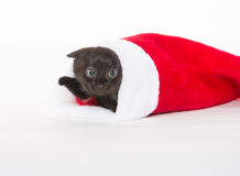 Cute black kitten in Christmas stocking Royalty Free Stock Images