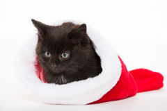 Cute black kitten in Christmas stocking Royalty Free Stock Photo