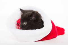 Cute black kitten in Christmas stocking Stock Photos