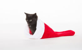 Cute black kitten in Christmas stocking Stock Image