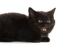 Cute black kitten crying Stock Image