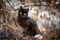 Cute black kitten Stock Photos