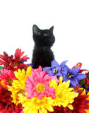 Cute black kitten and flowers Stock Images