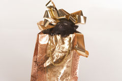 Cute black kitten in gold gift bag Royalty Free Stock Photography