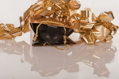 Cute black kitten in gold gift bag Stock Images