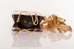 Cute black kitten in gold gift bag Stock Photos