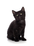 Cute black kitten isolated on a white background Royalty Free Stock Photography