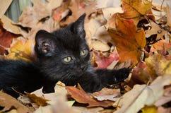 Cute black kitten in leaves Royalty Free Stock Image
