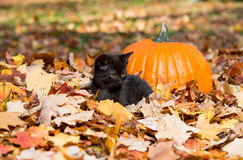 Cute black kitten and leaves Stock Photo