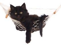 Cute black kitten lying in hammock Royalty Free Stock Image