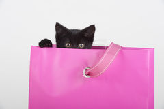 Cute black kitten peeking out of gift bag present Stock Photos