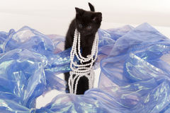 Cute black kitten playing dress-up Royalty Free Stock Photography